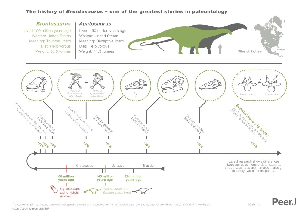 Brontosaurus infographics (by PeerJ) CC-BY