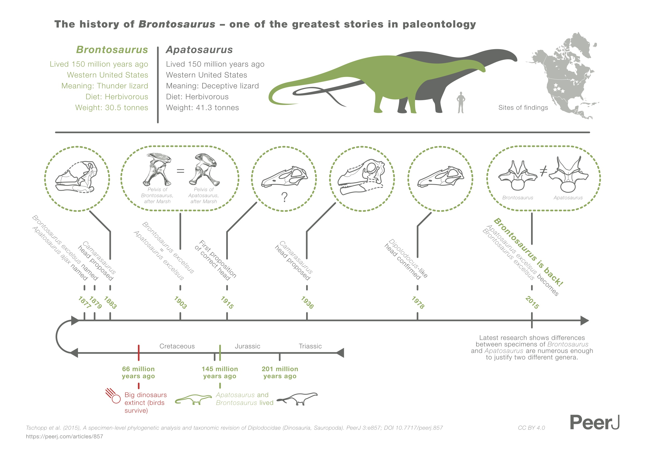 The history of Brontosaurus, as diagrammed by Tschopp et al in their 2015 paper.