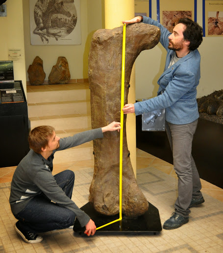 "Paleontologists Emanuel Tschopp and Octávio Mateus (University NOVA of Lisbon) measuring a sauropod dinosaur femur. Image credits: ""FCT-University NOVA of Lisbon / M. Ladeira"". Creative Commons license CC BY."