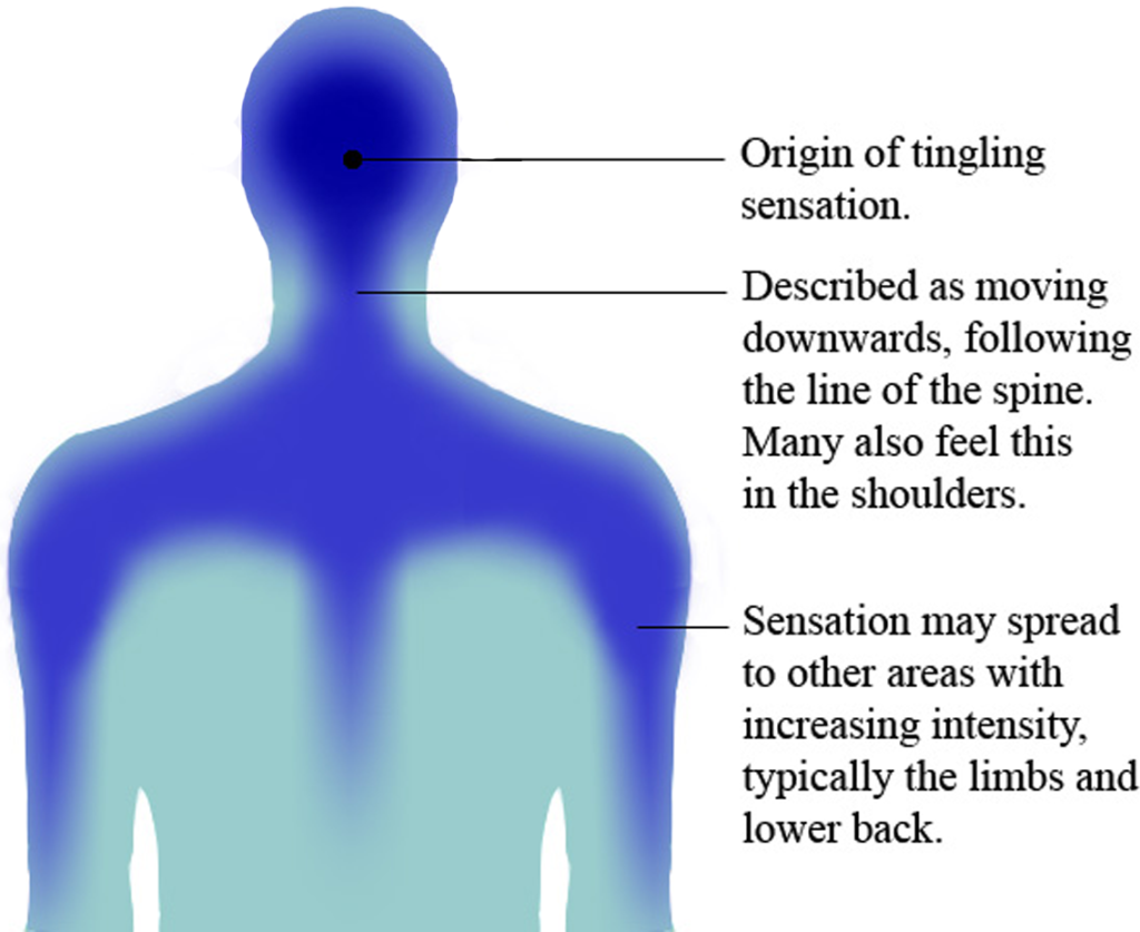 ASMR Map. An illustration of the route of ASMR's tingling sensation. Image shows rear view of the head and upper torso.