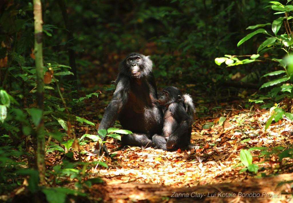 Zanna Clay_bonobo photo 1
